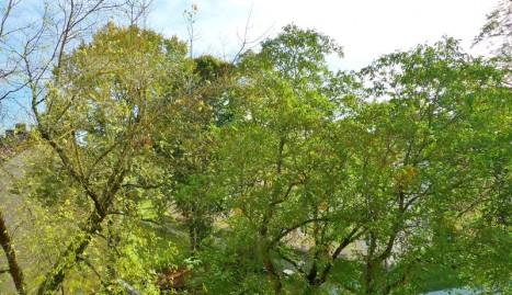 Blick aus der Wohnung in den Garten der Wohnanlage
